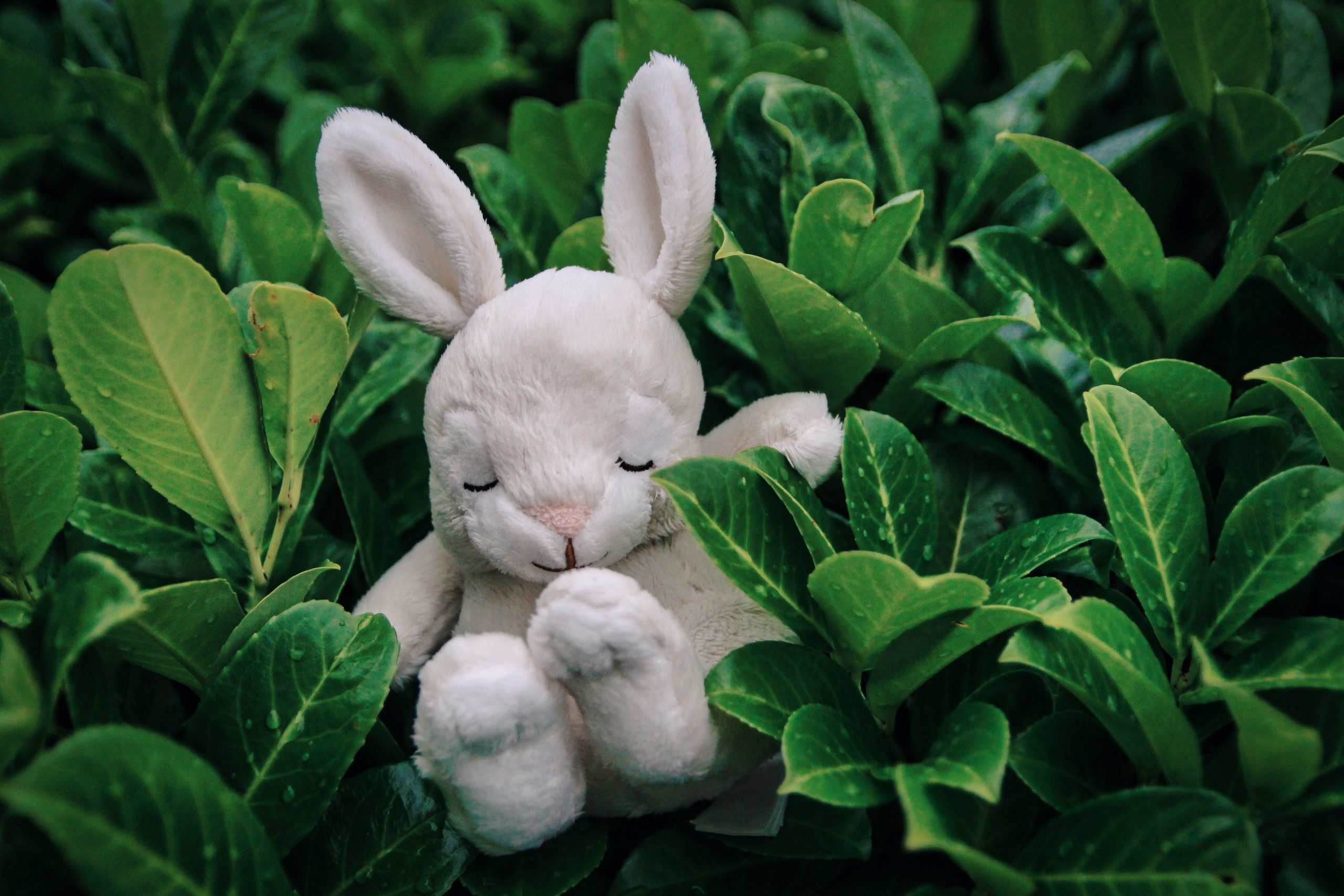 white rabbit figurine on green plant