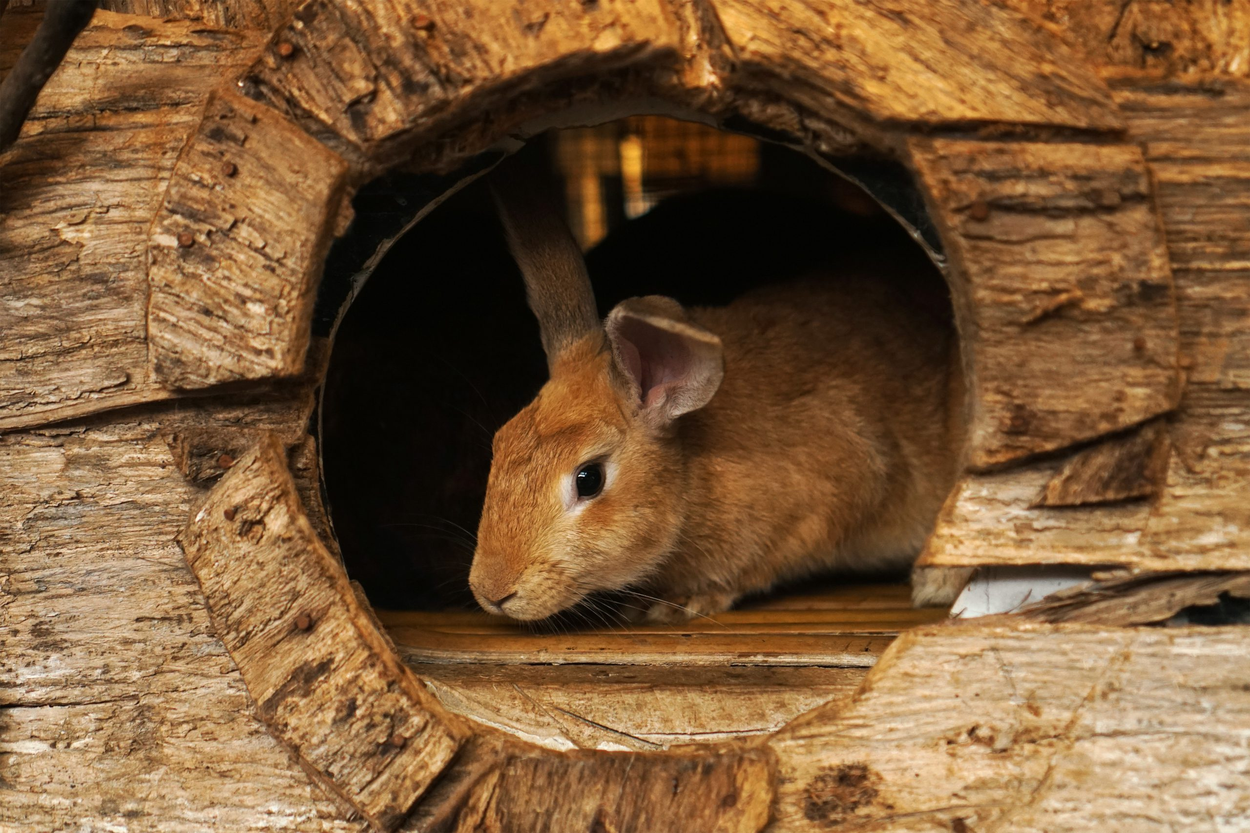 brown rabbit in brown wooden cage